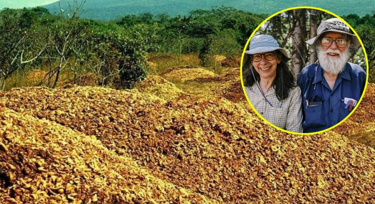 Ý tưởng lạ kỳ giúp khôi phục cánh rừng nhiệt đới với chi phí 0 đồng